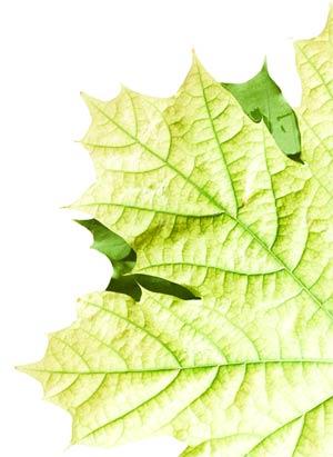 half-leaf-300