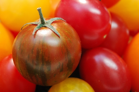 Lucious Tomatoes