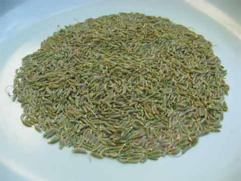 Fennel seeds I picked last week