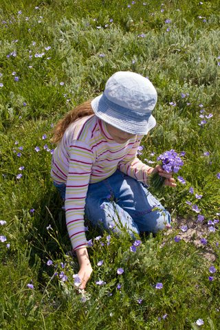 Child picking spring flowers