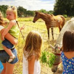 Children petting horses