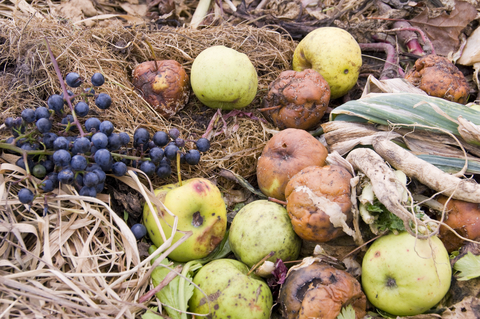 Compost with food and yard waste