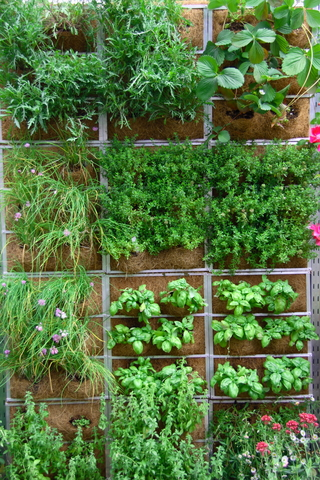 ... . Vertical gardens and living walls can be practical and decorative