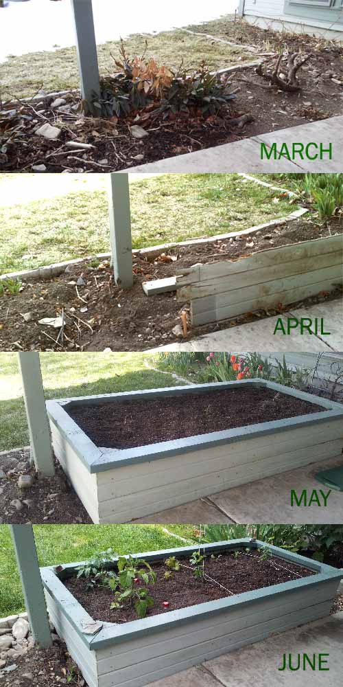 Monthly progress of our wild garden