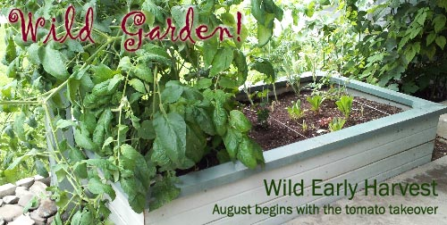 My wild garden at the beginning of August