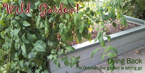 My raised bed in October