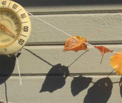 Fall? Hot leaf garland