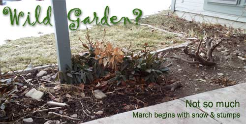 Future wild garden