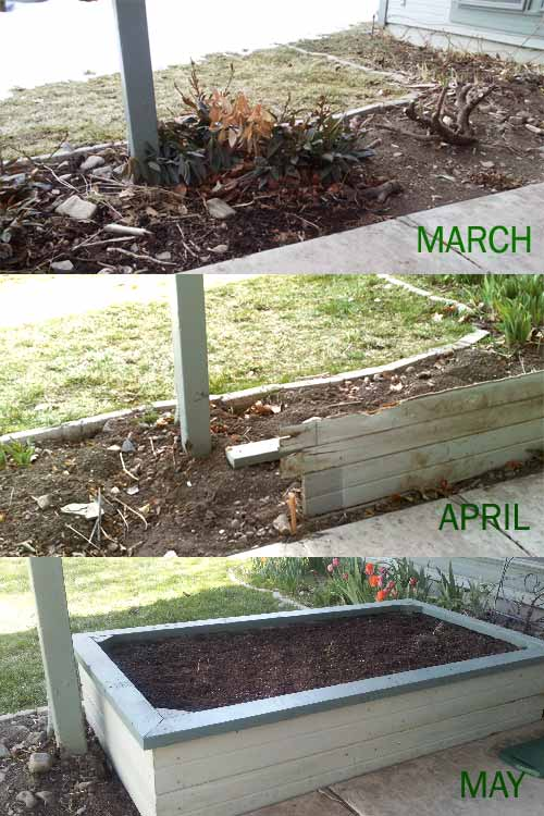 Progress of the wild garden from March through may