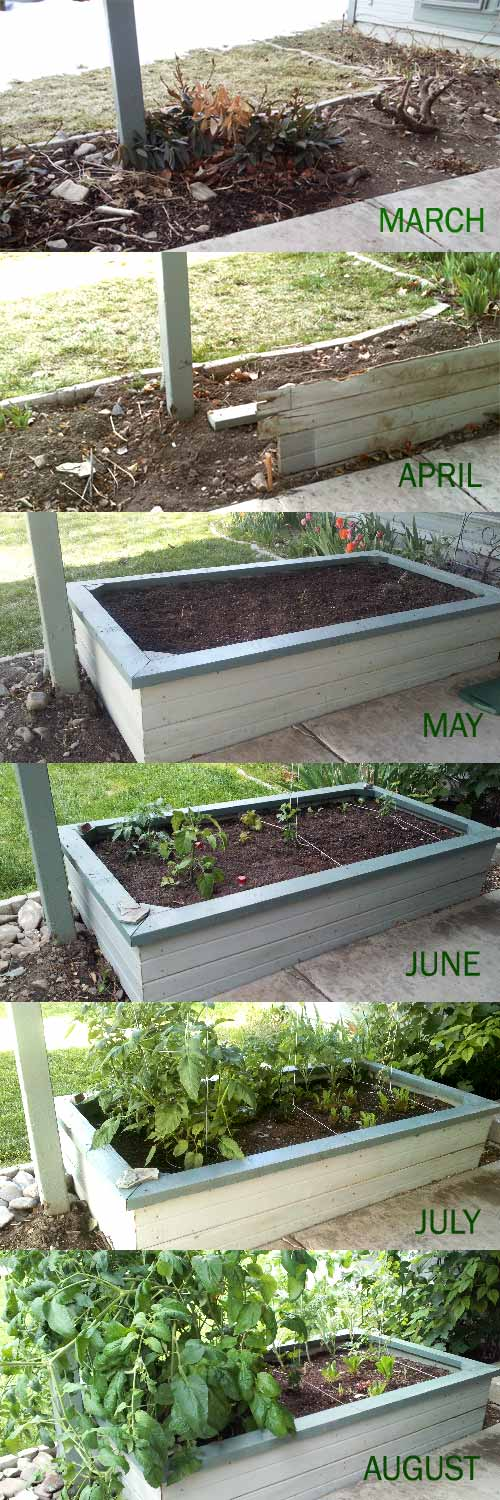 Garden growth month by month