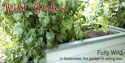 Small garden in September