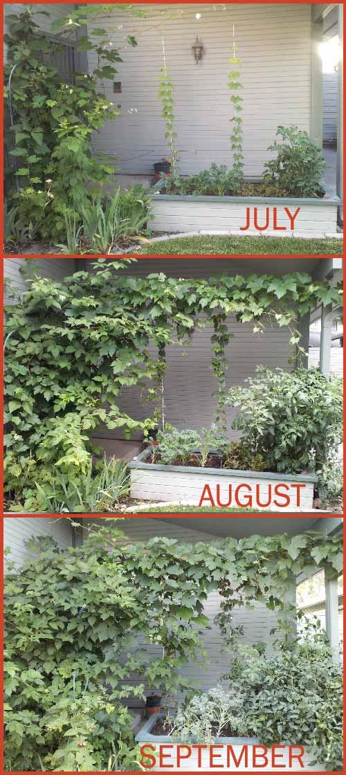 Garden month by month