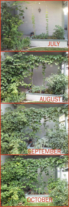Progress of my garden to October