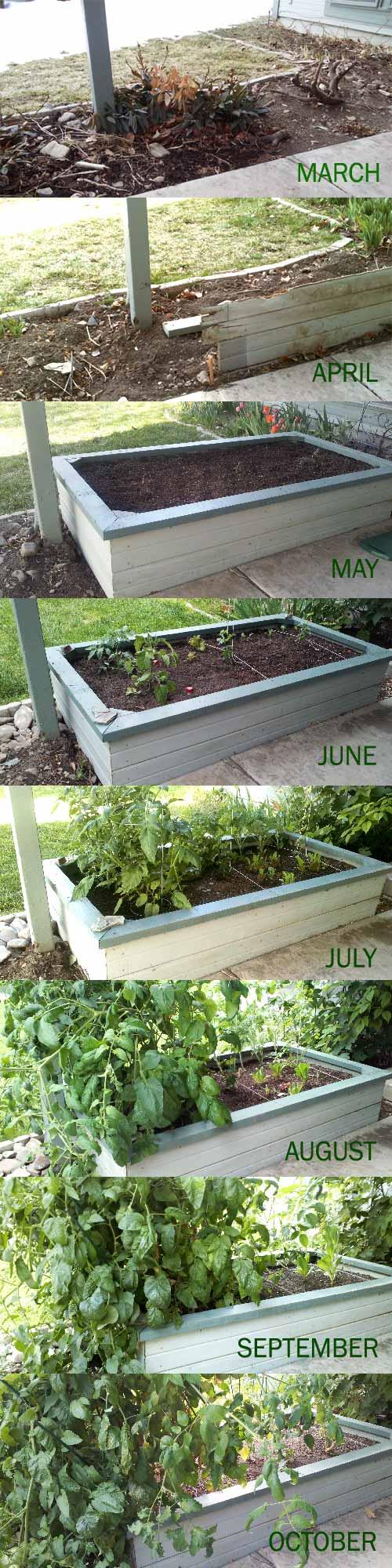 Progress of my wild garden until October