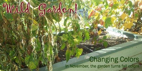 Wild garden colour in November