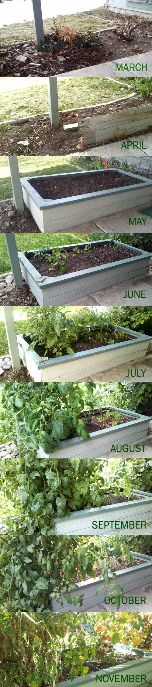 Progress of our raised bed in November