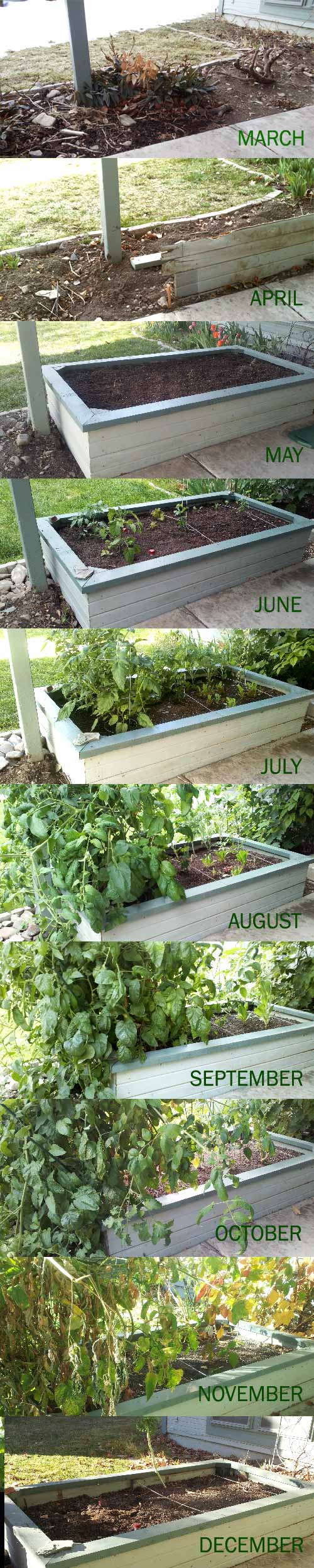 Full year of our raised bed