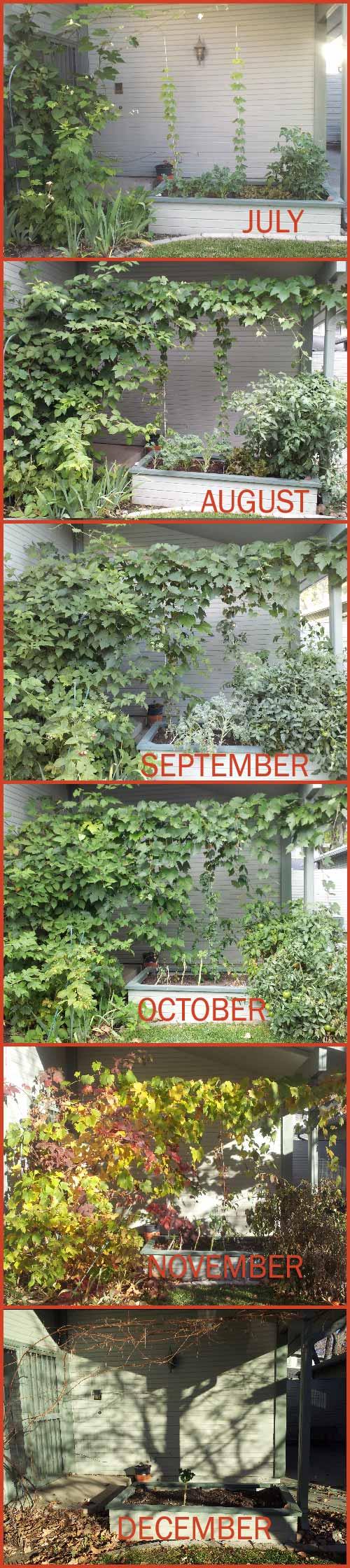 My garden through the year